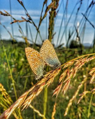 slovenija instanature countryside farmlife photography closeup thisisslovenia farm butterfly nature_perfection butterflies slovenia sunnyday natureza naturephotography igslovenia beautiful sloveniawithlove missyou amazing country_features nature ig_myshot kampadanes europe summer fiftyshades_of_nature geoslo loveyou walking