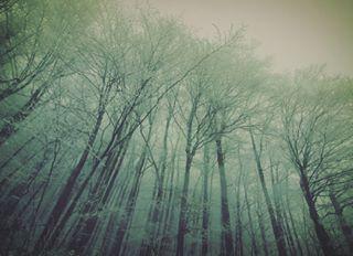 crystalforest light fagussylvatica whiteland frozenland difusionoflight trees fagetum forest forestwalk nature