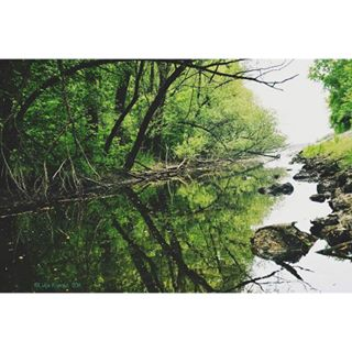 calm trees water nature drava peacefully dravariver croatia tree river nikon photography forest greennature walks