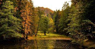 photo peacefully place purebeauty forest calming beautifulplace lake beautifuldestinations calm trees lidijarijavecphoto park autumn beauty photography