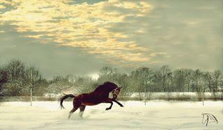 winterwonderland horses photography snowhorse croatia pferdefotografie snownature lidijarijavecphoto horsestagram photo action winter pferde instahorse horsesonsnow pferd horsephotography croatiafulloflife nature snow horse