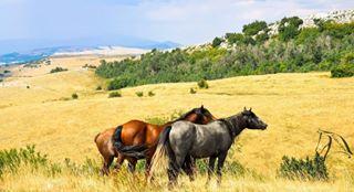 nature horses naturephotography herd bosnia photography landscape bosna wildhorses
