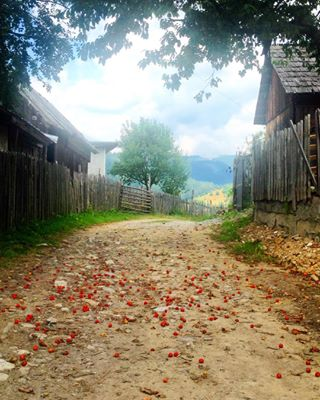 fruit igersromania countryside tbt instanature trees abundance mountain nature ig_romania moodygrams romania