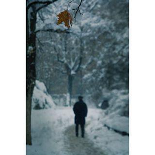 visualoflife wallpaper createcommune winter of2humans visuals sharf photography people photooftheday film novisad global_hotshotz instagood blue feature camera lsnow agameoftones autumn pokazisvojrad artofvisuals nikond7100 thecreatorclass serbia