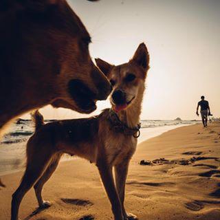 sun voigtländer coast wanderlust beach puppy dogs summer 15mm sonya7 wonderlustsrilanka sand srilanka sea sonyalpha srilankatravel