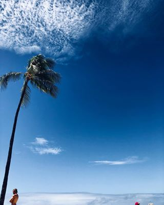 top photography quotes blogger beautifuldestinations waikiki life travelblogger travelholic beach hawaiilife palm surfing best spirituality hawaii bloggers travel hawaiistagram