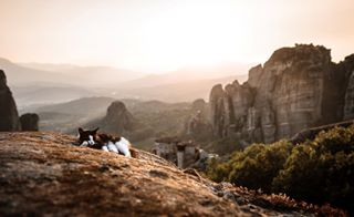 wild volos_photographers team_greece super_greece reasonstovisitgreece naturephotography naturelovers nature_greece_animals nature_greece nature natgeo meteora majestic love lifo illpic eyes catsofinstagram catsofgreece catsandgreece catsagram cats cat canongreece canon5dmarkiv animal agameoftones