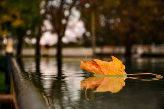 angles autumn color greatday leaf nature nikon nikond7200 nikon_photography photo szolnok