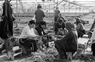 herbalists greenhouse georgia