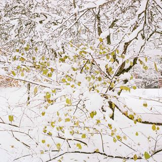 snowy photography outumn longing leaves latvia landscapephotography ilgas end earlywinter dreamy deadend daugavpils contemporaryart colours