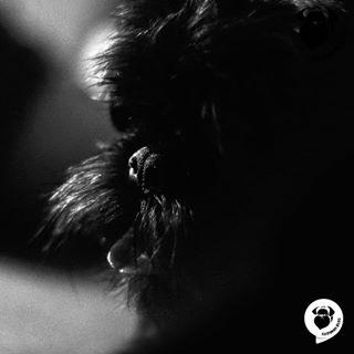 belgiangriffon blackandwhite bnw brusselsgriffon budapest bw cutedog dog doglover dognap dogoftheday dogphotography dogsofinstagram dogwithstyle griffon griffonbelge hairydog hungary kutya lovedogs playwithdog spring szifon szifonov