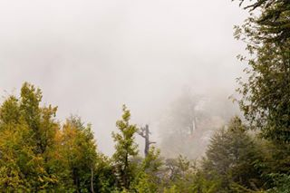 landscape mist chile trees vilches outdoors nature woods green nationalpark foggy photography