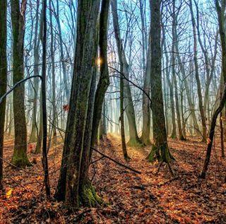 forest landscape_captures sun landscapephotography
