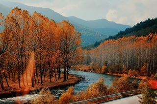 autumn bdz beautiful bulgaria colourful forest landscape magical mine moodybulgaria nature november october orange out photography photooftheday picoftheday poem pretty sunlight train travel vsco vscobalkan vscobulgaria warmth windowview winter yellow