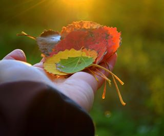 sverige sunny autumnleaves sweden autumn dawn sunset sunshine forest nature colorfulleaves hand seasons chilly beautifulnature fall fallleaves colorpalette sunrays colorful colors