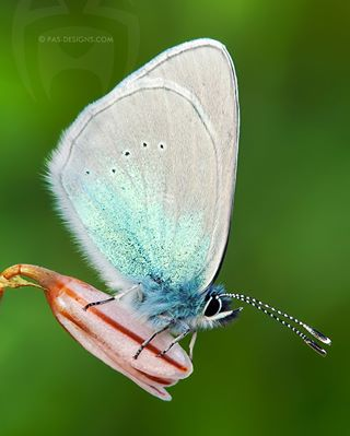 green light nature detail beautiful white animals wildlife natgeoinsects cool macro macro_photo spring natgeo art macrophoto awesome butterfly photo wings naturelovers cute