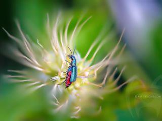 macroworld_tr macro_captures spring macroclique nature photo insects macro_spotlight macro_freaks igbest_macros cool flowersandmacro top_macro animals awesome macro natgeo insect bns_macro detail macromood cute wildlife