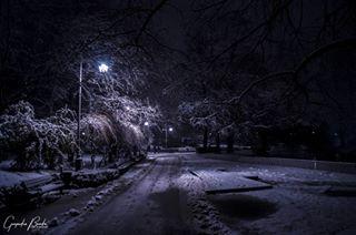 snow walking trees night park nature gospodinbrada light nikon novisad alone vsco vojvodina