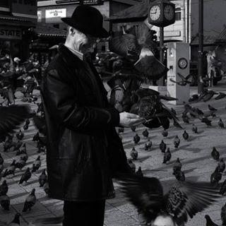 love pidgeonpark town bascarsija oldtown man old sarajevo oldbuilding vsco bosnia pidgeon blackandwhite