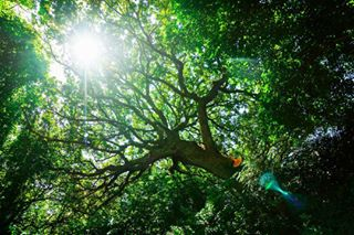 nature tree potd green lifeismovement photooftheday camera forest phill slt travel sun light journey filmmaking sony photography