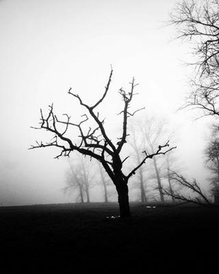 landscape ilovenature foggyday creepy blackandwhitelovers tree blackandwhite blackandwhitephotography arted treehugger foggy