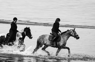 denmark travelling beach horses ontheroad loveley beachlife seaandsand blackandwhite sea blackandwhitelover blackandwhitephotography animals