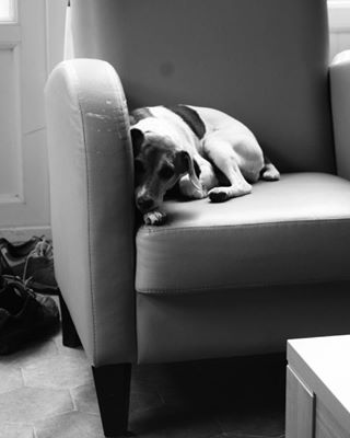 relaxed dogofinstagram blackandwhitelover parsonrussell ilovemypet blackandwhite ilovemydog jackrussell arted dogsrule blackandwhitephotography dogstagram woefmagazine jackstagram