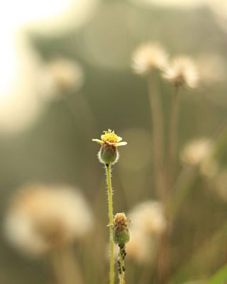 visualsoflife theuncommonbox sunkissed photooftheday photography peace naturephotography naturelovers nature morning macrophotography instagood indiaphotoproject indiaclicks illustration garden flowers flower canonusa canon beautiful awesome_earthpix awesome art abstract
