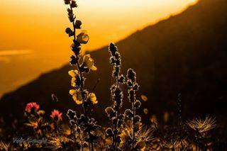 mountain flowers photo photography sun landscape photographer sunset