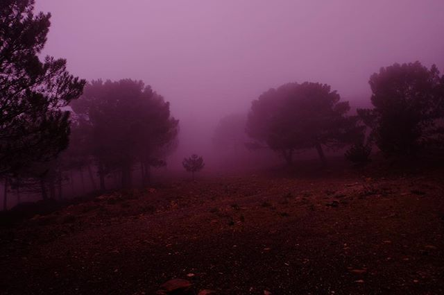 andalucia clouds fog forest fujifilm morning morninglight mystical nationalpark nofilter spain trees vanlife xt10