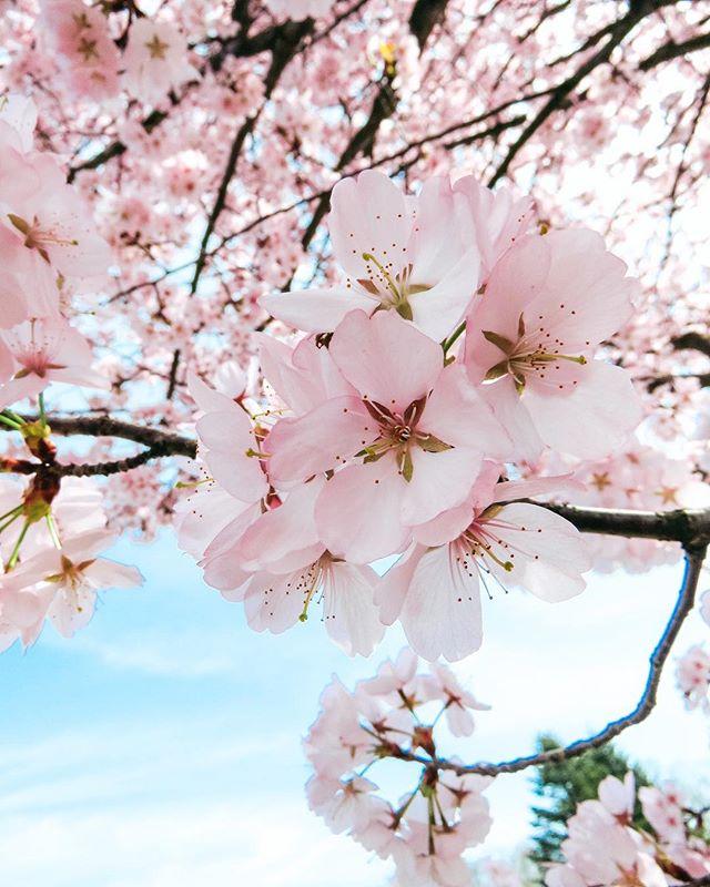 followlike followme instagram interestingworldroxi like photographer апрель2018 весеннеенастроение весеннеепутешествие весенниецветы весна2018 взаимныелайки деревьявцвету инстаграм инстаграмнедели люблювесну навстречуприключениям путешествие