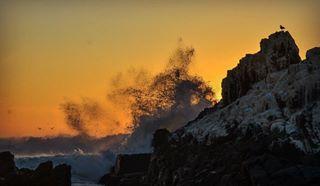 wavesbreaking waves travelphotography sunset shore seaside portugal nikon_photography_ nikonphotography nikond90 naturephotography möwe mare lonesomedove gischt