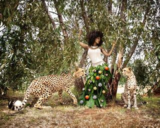 southafrica cheetahs photographer project magazine christmascollection photoshooting africanmodel africa ornaments model cheetah christmas
