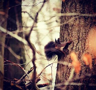 wildlife panasoniclumix lumixg9 forest kletterkünstler beautyofnature mftsystem panasonic100300mm mft squirrel waldtiere lumixexperience animalgram natur tier eichhörnchen outdoor animals animallover