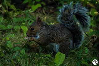 bigapple animal unitedstatesofamerica likeforlike justgoshoot centralpark squirrel unitedstates squirrelsofinstagram m_j_photography f4f usa animalphotography photography like4like nature dream_new_york park newyork nyc naturephotography follow4follow travel travelphotography
