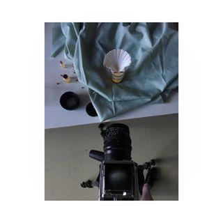 hasselblad project woman lover new fineart studio passion contemporaryart shooting analogue mediumformat stillife process shells photography