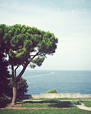 rovigno summer nature rovinj horizon photography bluesky travel blueandgreen photographylovers sea