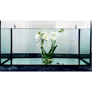 aqvarium framed glasslove suffocation
