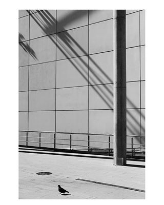 tuvi thecreatorclass street_vision streetphoto_bw storyofthestreet spi_collective spi_bnw somewheremagazine pigeon myfeatureshoot minimalist life_is_street ig_street ig_minimalist hikaricreative gallery_legit fujifilm fujifeed fineart_photobw fineart decisivemoment bnw_of_our_world bnw_creatives bnw_captures 35mm