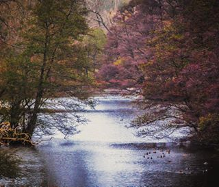 outdoors reflection mersham kent vsco uk colour rural mycanon nature trees landscape countryside canon igerskent river water autumn lake