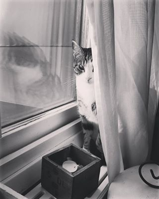 animals beautiful blackandwhite cat catlover love lovecats photography photooftheday sunnydays