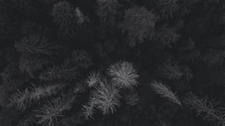djiphantom4pro blackandwhite monochrome forest nature blackwhite drohnengeek phantom4 phantom4pro latvia aerial gulbene djiphantom4 phantom dji bw