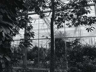 vscoeurope botanical jungle white monochrome palms vscocam vsco blackandwhite summer black mono