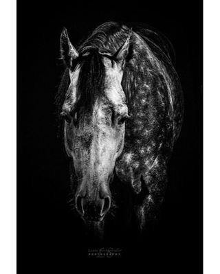 aqhaproud winnieswilly eqwtdsbw_1 horsephotography rlbestofsudden equinephotography pferdefotografie equinephotos rlbos eqwtdsah_3