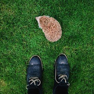 animal grass hedgehog newfriendship rhsphotocomp surprise