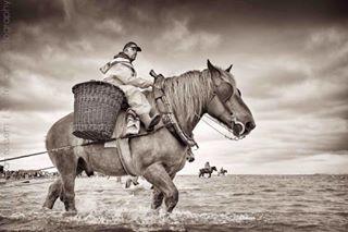 monochromatic fishing garnaalvissers shrimp horse paardenvissers culture unesco beach europe travelgram northsea flanders belgium oostduinkerke heritage horsebackriding europetravel coast travel cultural monochrome