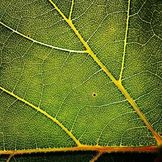 green leaf beautifulview texture