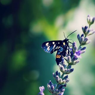butterfly photography colors nature photoshop sony beautiful lavander instadaily