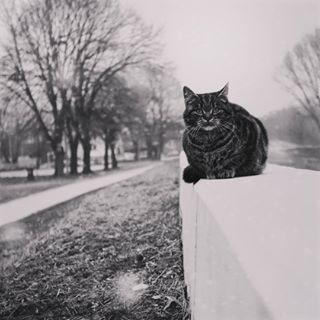 cold photography mood agameoftones view moodygrams insta_bw instagram osijek ig_shotz beautiful inspiration bnw_captures waiting bnw_photography animal_captures cat