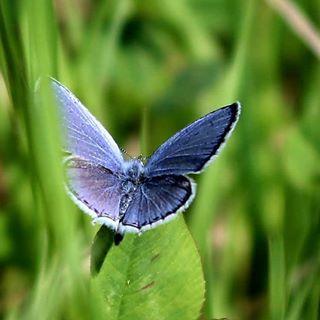 photooftheday nature canonphotography gurushots canonphoto capturethemoment butterfly macro_brilliance grass canon romania